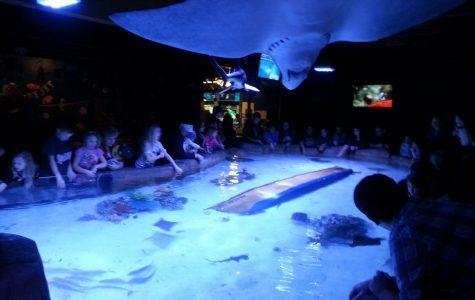 Portland's first-ever aquarium opens to public