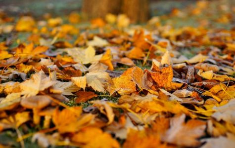 From Summer to Fall: The Leaves Perspective